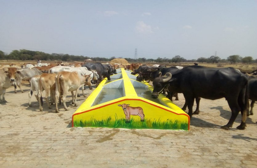 Special campaign for castration and artificial insemination to promote milk production in the state