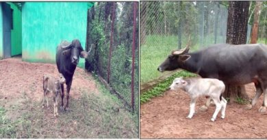 Two young guests came to the state animal family of Chhattisgarh