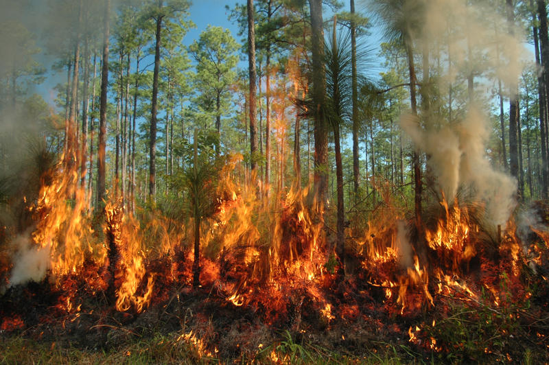 Fire in the forest, stir in the area ...